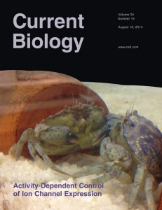 current biology cover